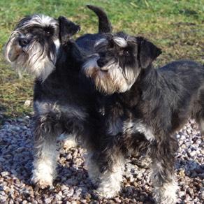 Herman & Buster